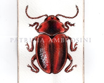 Original ACEO ..Entomoscelis adonidis..Original  watercolor Card painting  Insecta Coleoptera