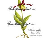 Mountain Lady's Slipper Gliceé Print, Artist Signed, Orchid, Botanical, Illustrative, Floral