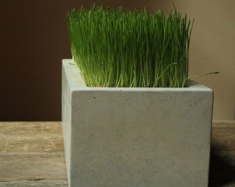 Concrete Box Planter