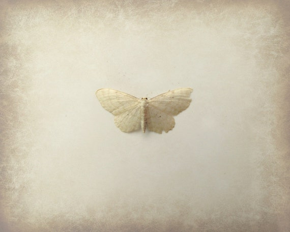 Nature Moth Photography Beige Simple Still Life Insect Lepidoptery Neutral Sepia Tone Home Decor 10x8 Print Lunar...