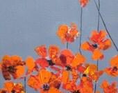 """ORIGINAL orange POPPY PAINTING 8""""x8"""" orange red poppy flowers devikasart on Etsy"""