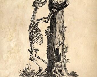 Vintage Science Animal Study Reproduction Print. Bear Skeleton Anatomy Educational Chart Diagram Science  - CP120