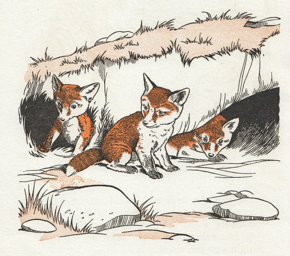 sweet baby fox illustration countryside by theStoryOfVintage