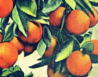 ORANGES print, Mom Gift, Fruit Art, Wife Gift, vintage botanical art, Mid Century kitchen art, Mid Century kitchen wall art, Fruit Print