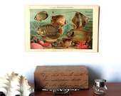 Fishes Antique Original 1896 Lithograph from Vintage Dictionary