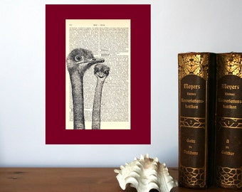 Ostrichs Art Print on Antique 1896 Dictionary Book Page