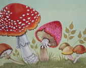 Reserved - MUSHROOMS - GREEN background - printed by DONALD Art Company - 1971 - ready for framing - Holland