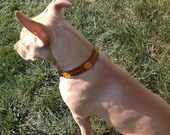Sunflower Martingale Collar - 1 inch Tooled and Painted Leather Dog Collar