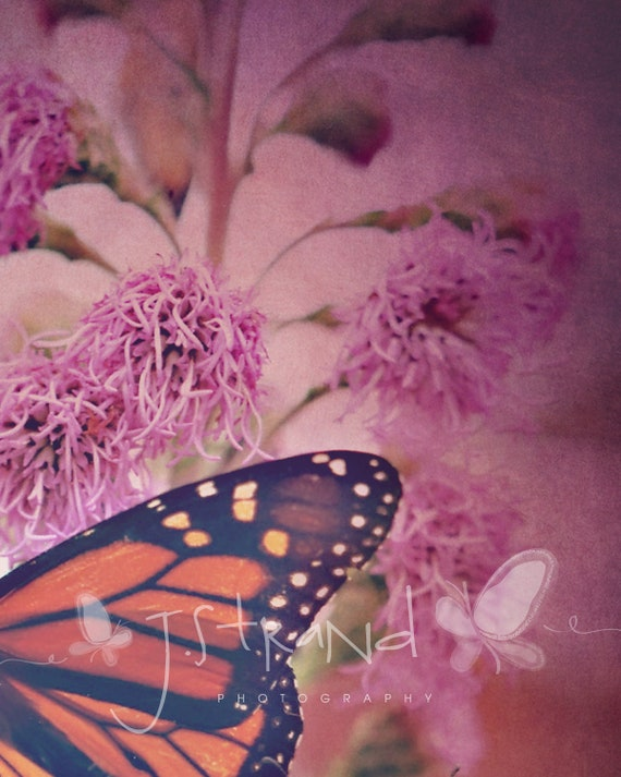 Wings 2 Monarch Butterfly - 8x10 Fine Art Photograph, nature photography, textured photo, shabby chic