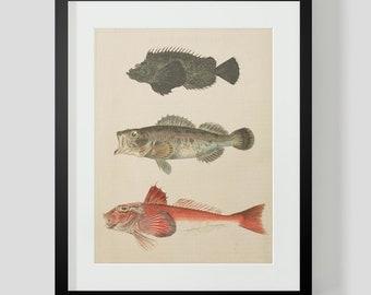 Japanese Fish Print 3