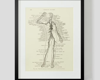 Anatomy Print, Arteries of the Body