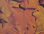 Falling Leaves 12 x 12 Scrapbooking Paper