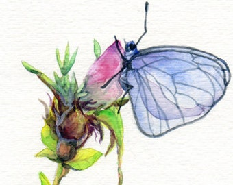 Original Watercolour painting - Butterfly on Rose Bud