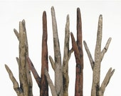 Lava Bed Driftwood Forest