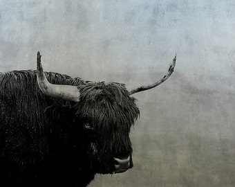 """Bull Photography - Nature Photography - Rustic Steer Shabby Chic - Home Decor  - Fine Art Photography - """"The Lumbering Beast"""""""
