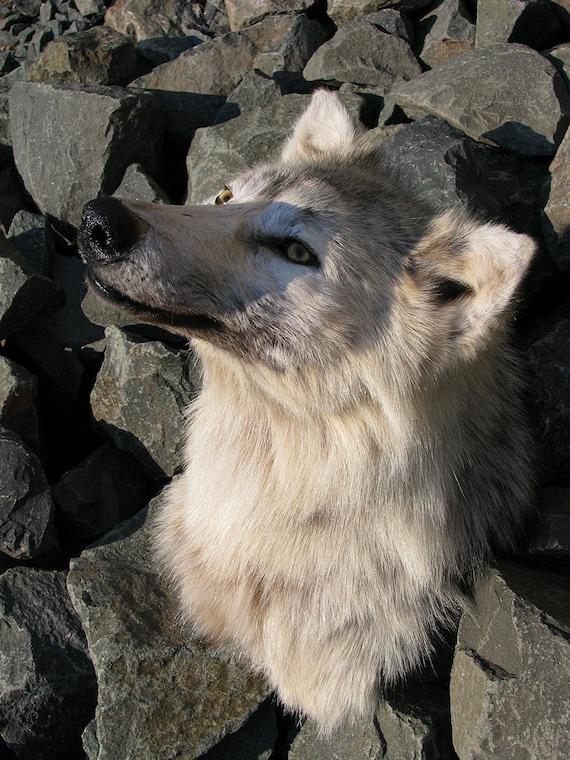 Taxidermy Wolf Shoulder Mount