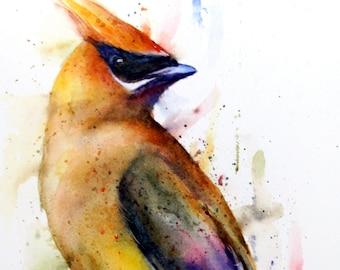 CEDAR WAXWING Watercolor Bird Print by Dean Crouser