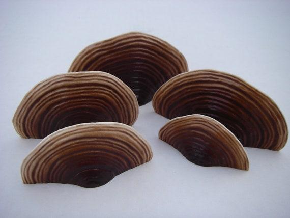Shelf Mushroom Magnet Set