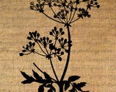 Iron On Transfer Fabric Transfer Burlap Digital Graphic Art Hemlock Plant Leaf Instant Download Digital Image Download Pillows No. 4554