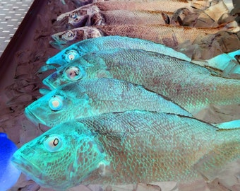 Psychedelic Fish, color photo, fine art photography, fun funky fish art, home decor