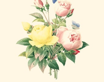 Vintage Flower Bouquet of Roses and Butterflies  Print 8x10 P203