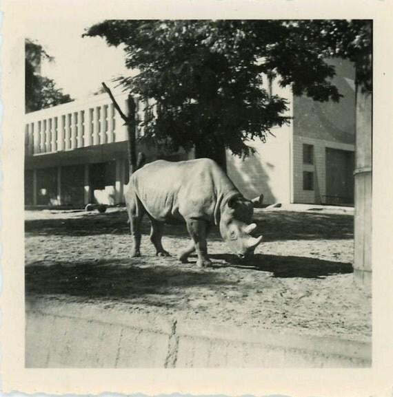 "Vintage Photo ""Rhino Fun"", Photography, Paper Ephemera, Snapshot, Old Photo, Collectibles - 0075"