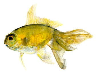 goldfish watercolor print signed by artist Stephanie Kriza