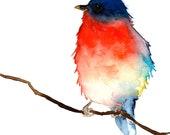 Original Bird Watercolor - Little Blue and Red Bird