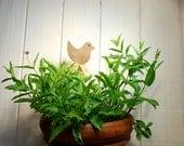 Plant Markers, Wood, Bird, Garden, Ornament