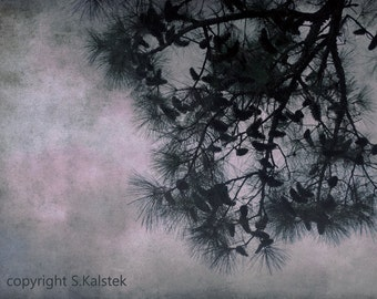 Pine Tree Photograph Nature Tree Pine Cones Dreamy Pine Branches In a Soft Pink Blue Gray Sky 8x12 Wall Art