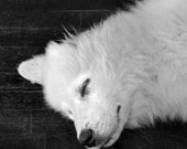 Dog Photography 5x5 Black and White Puppy Art Great Pyrenees Gift for Dog Lovers