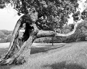 Tree Photos, Holy Tree, Photography, Nature, Tree Photography, Trees, Black and White