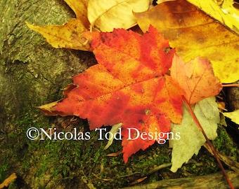 Fall Leaves 8x10 photo