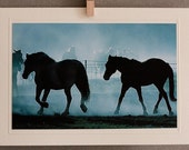 HORSES,  nature notecard, 5 x 7 photo, blank and folded