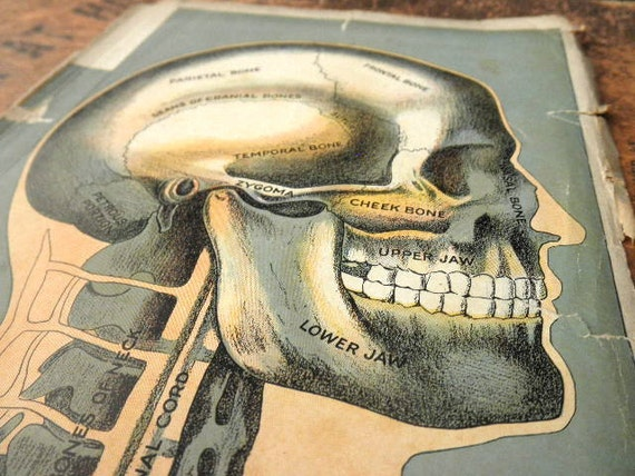 RESERVED----original page - color lithograph MEDICAL CHART from antique 1916 medical book - Human Skull