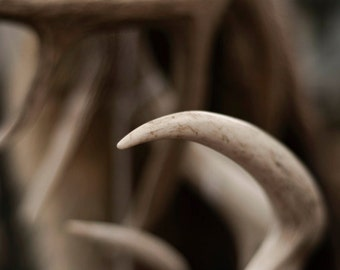 Rustic Cabin Antler Neutral Brown Tan White Cream Creme Fine Art Photograph 8x10 Home decor Man Cave Gift for Him Nature Natural
