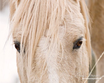 Cloud's Eyes - Fine Art Wild Horse Photograph - Wild Horse - Cloud - Pryor Mountains - Fine Art Print