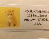 Golden Tabby Kitten Return Address Label