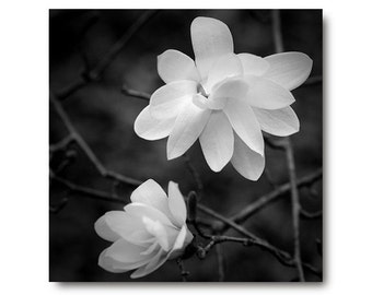 Black and White flower photography, Black and White art print, magnolia print, flower, home decor,