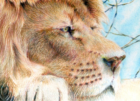 Original ACEO for the WWF - 'Surveying the Kingdom' lion illustration (Day 19)