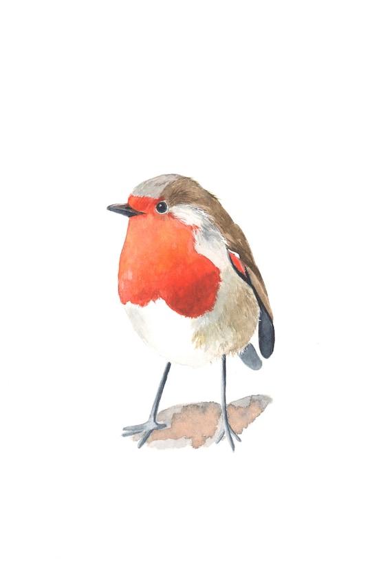 Robin painting -  R002 Print of watercolor painting 5 by 7 Christmas decor wall art print - bird art print