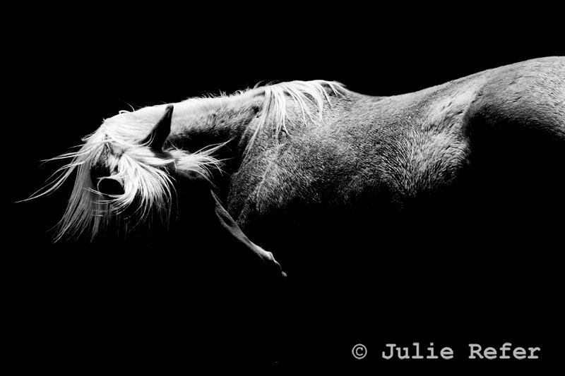Dressage photography black and white