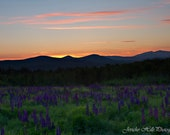 Sunrise Over a Field of Lupines