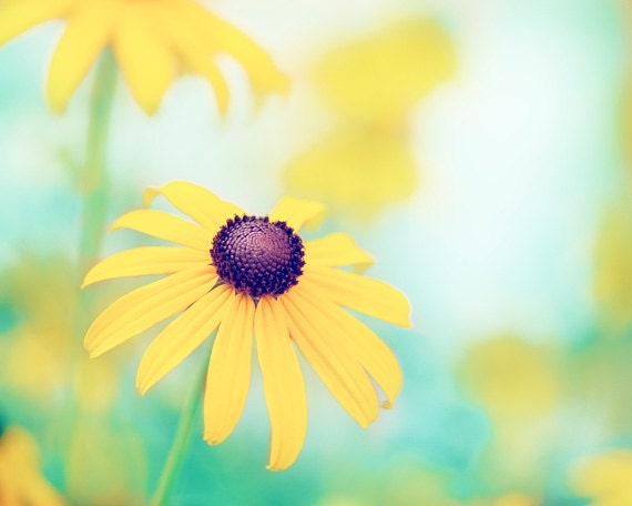 "Flower Photography - yellow turquoise teal colorful mint blue green nature floral spring wall print - 20x24, 24x30 Photograph, ""Cheerful"""