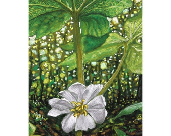 Mayapple:  archival card or print