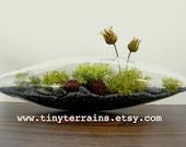 Handsome:) Little Lichen Vessel Terrarium