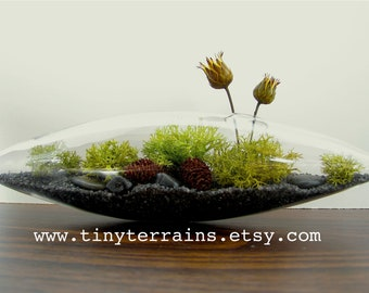 Handsome:) Little Lichen Vessel Terrarium