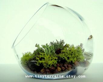 Modern Organic Lichen Terrarium