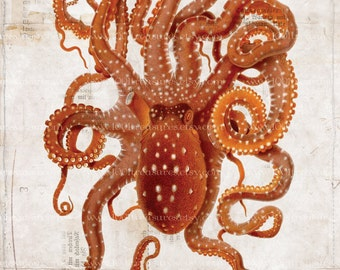 Antique Octopus Art Collage Print - Natural History - Octopus Collage Home Decor - Beach Decor