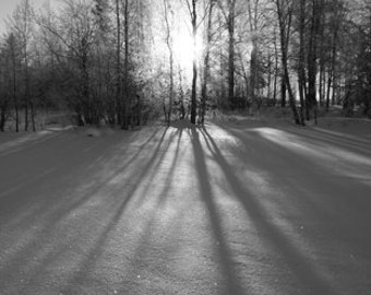 winter sunrays photograph - winter wonderland black and white photo - winter forest sun snow photo black and white - sunrays forest winter